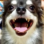 犬の口臭の原因は?病気?対策方法は?