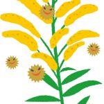秋に花粉症?症状で咳がつらい場合の対処方は?予防と対策の方法は?