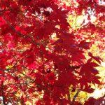 高野山の紅葉を見に行こう!見頃はいつ?混雑するのはいつごろ?