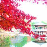 奈良公園の紅葉の見頃は?見どころは?駐車場は混雑するの?