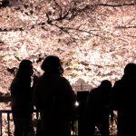 夜桜を見る時に準備しておきたい寒さ対策で服装は?便利アイテムは?
