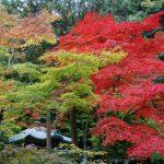 南禅寺の紅葉、見ごろの時期はいつから?ライトアップは?混雑状況は?
