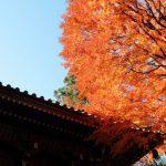 高尾山の紅葉と紅葉まつり、いつからいつまでが見頃?混雑状況は?