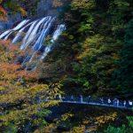 袋田の滝の紅葉の見ごろ時期はいつ?ライトアップは?混雑状況は?