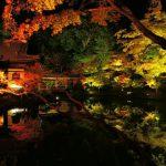 高台寺の紅葉、見頃はいつから?ライトアップは?アクセスと駐車場は?