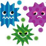コリネバクテリウム・ウルセランス感染症とは?感染経路は?治療方法は?